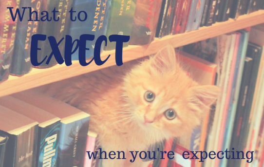 What to Expect When You're Expecting a Book: Cover Design